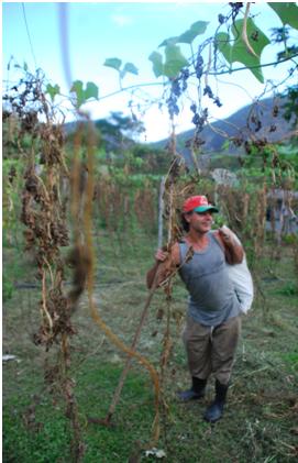 luizinho farmer