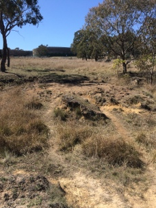 Previous location of kangaroo grass.